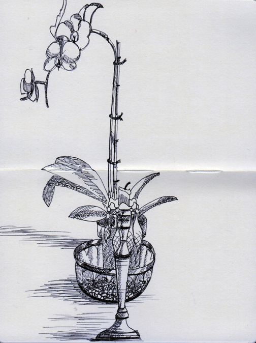 20130303_Orchid
