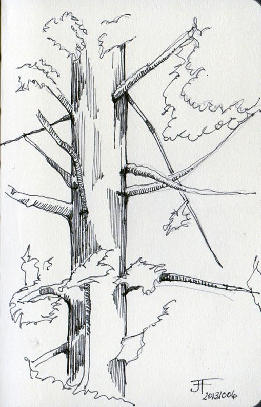 20131006_Tree_Line