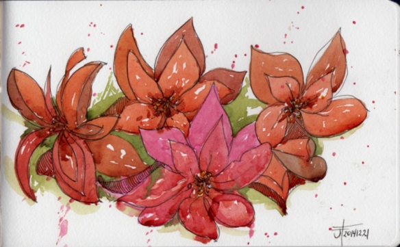 20141222_Poinsettias