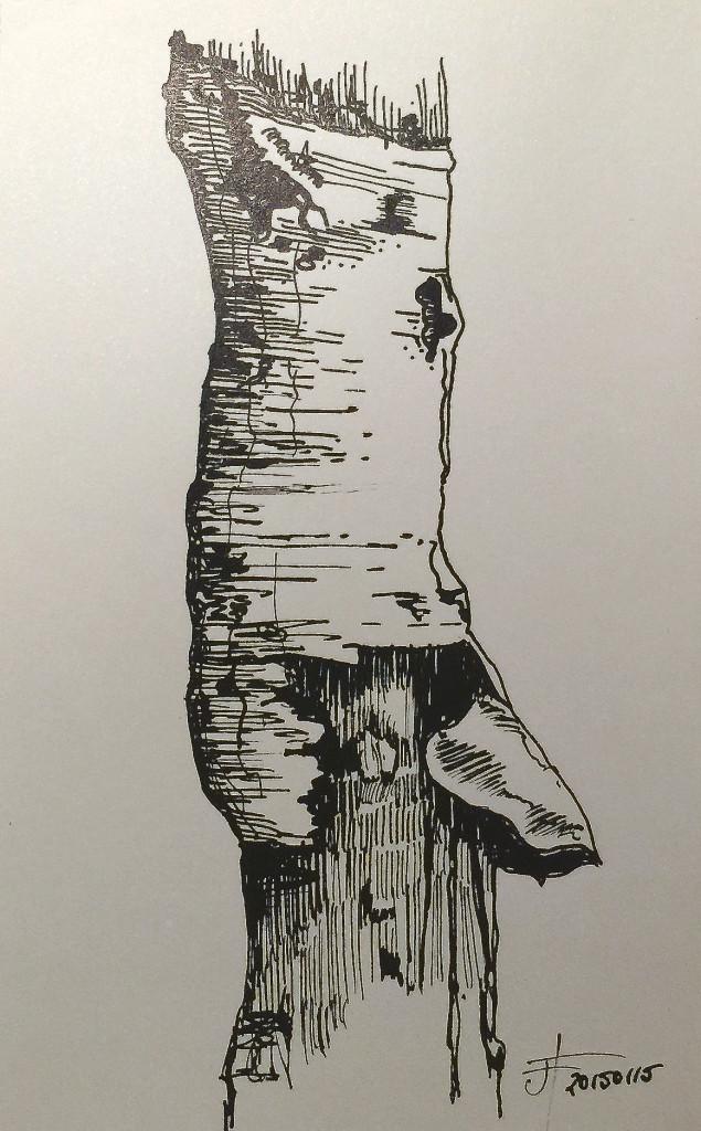 20150115_RottingBirchTrunk
