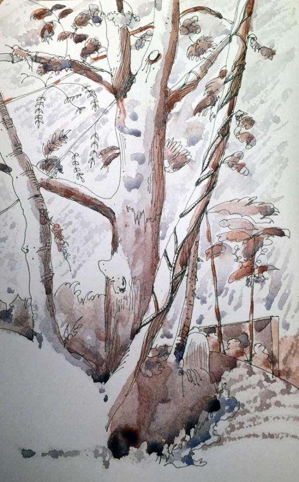 20150224_Trees