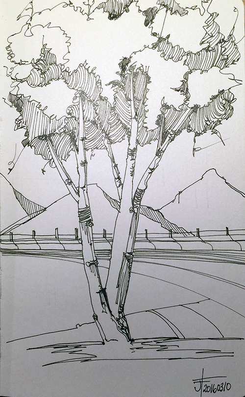 20160301-jane-hannah-drawing-tree