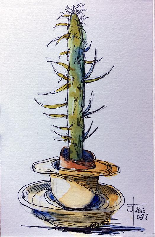 20160319_cactusColour