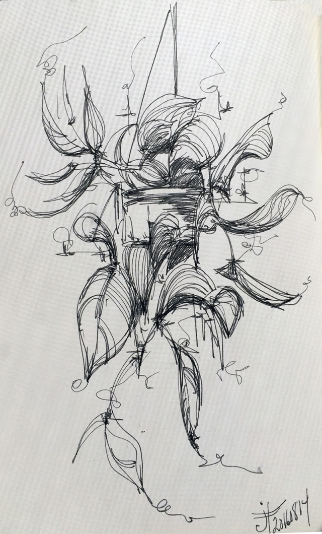 20160814-golden-pathos-vine-drawing-jane-hannah