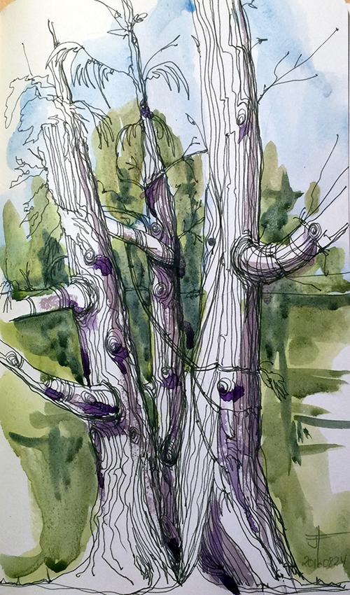20160908-john-abbott-tree-watercolour-jane-hannah
