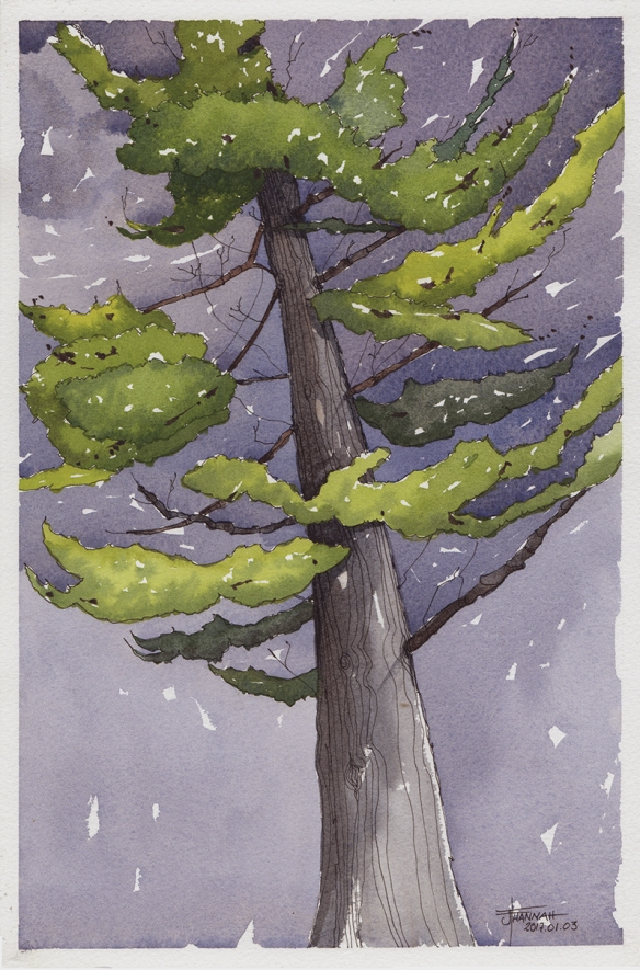20170104-pine-king-watercolor-jane-hannah-lores