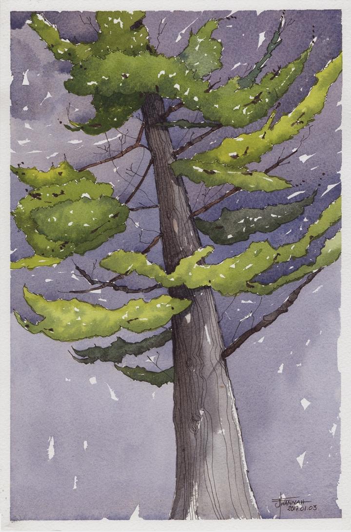 20170104-pine-king-watercolor-jane-hannah-lores