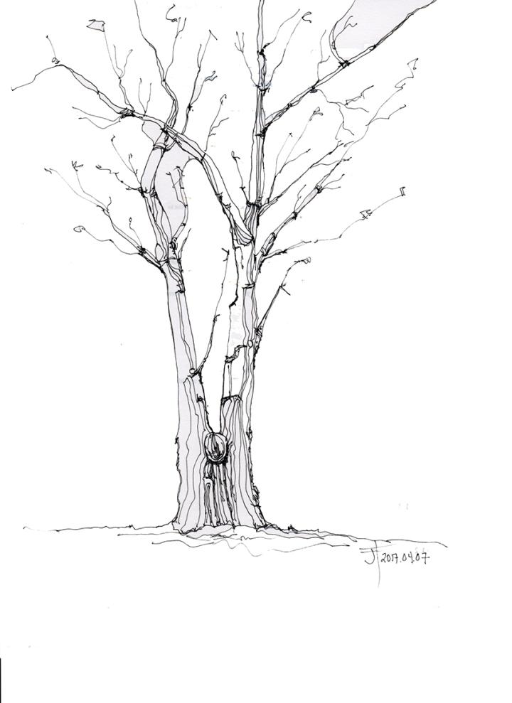 20170407-JAC-tree-loRes
