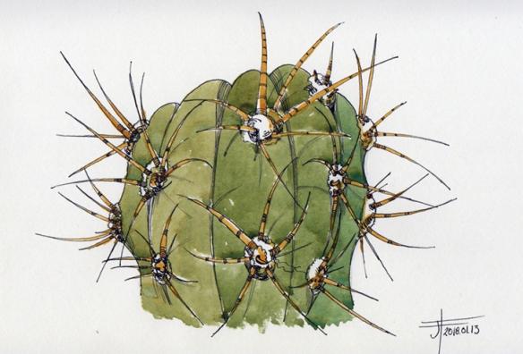 20180114-cactus-jane-hannah-loRes