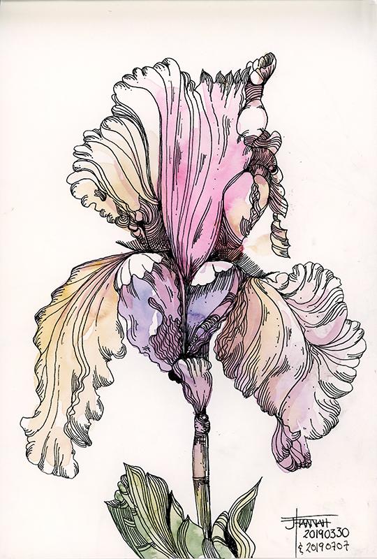 20190707-iris-colours-jane-hannah-loRes