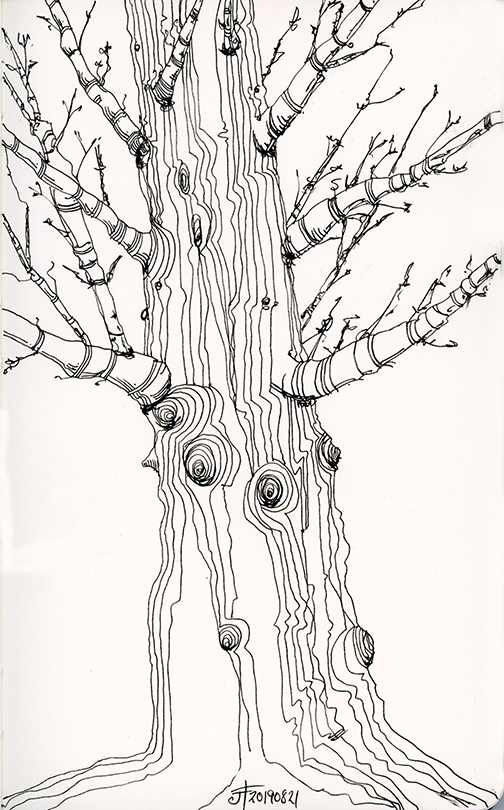 20190821-tree-drawing-jane-hannah-loRes