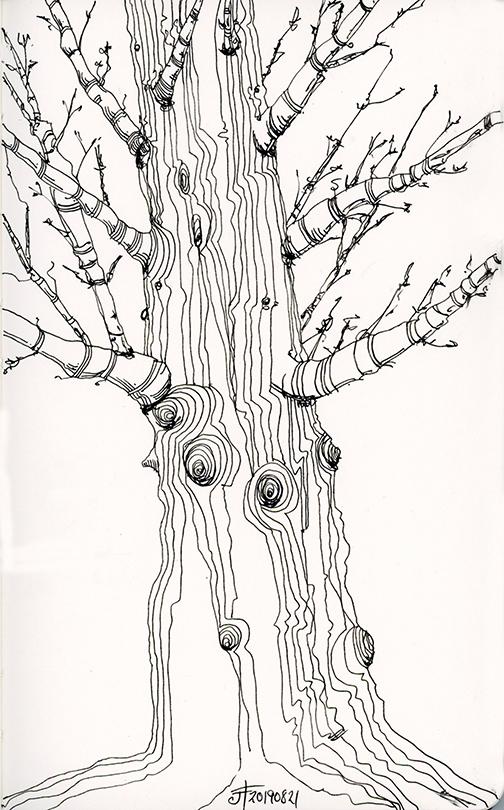 20190821-tree-drawing-jane-hannah-loRes