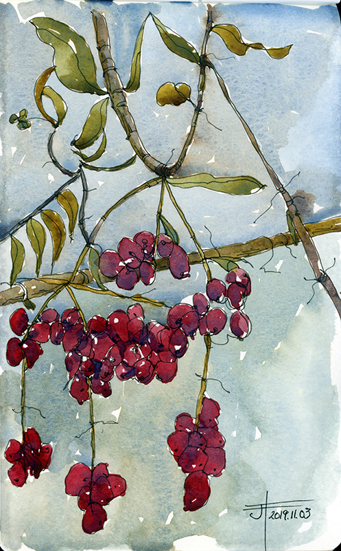 20191103-berries-jane-hannah-loRes